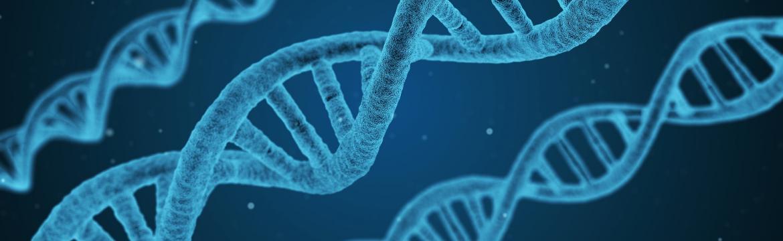 Mohou mít někteří lidé genetické dispozice ke ztrátě svalstva?