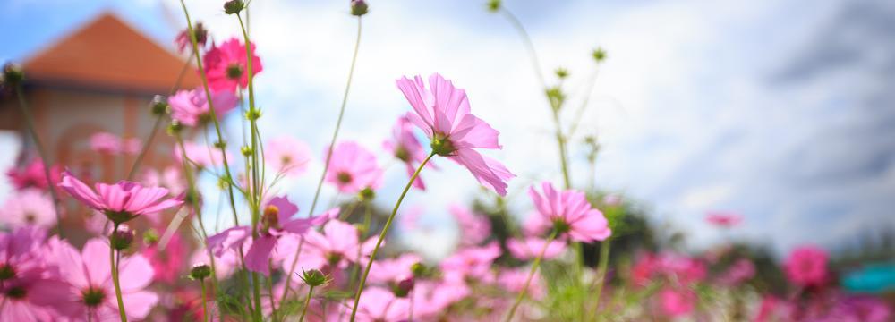 Jaro je tu od 20. března! Podle čeho se řídí datum jarní rovnodennosti?