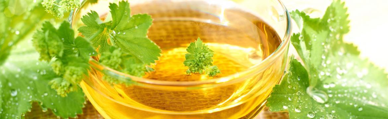 Kontryhel – bylinka, kterou by si měla dopřávat každá žena