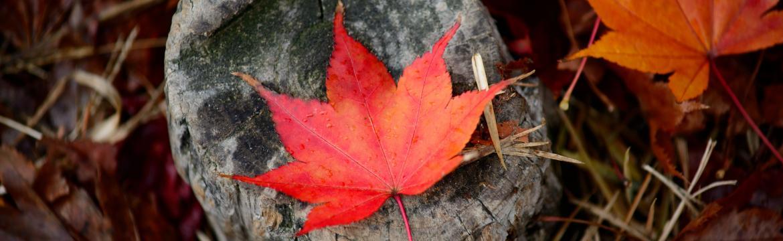 Nestyďte se za podzimní únavu. Pomoci mohou bylinky i jedno typicky české ovoce