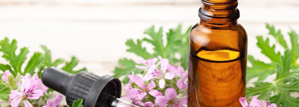 Růžové geránium – využití v aromaterapii a vliv na zdraví