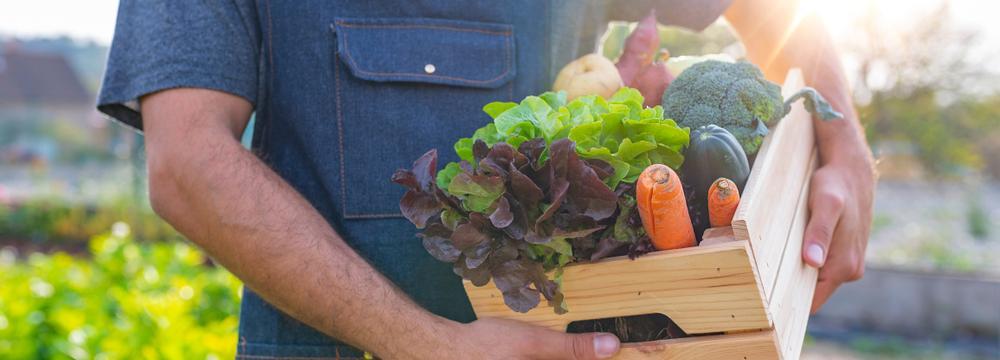 Biopotraviny: má význam je kupovat a opravdu jsou pro nás zdravější?