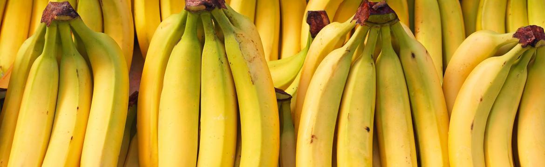 Život bez banánů? Možná! Banánům hrozí zkáza