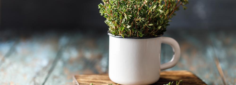 Voňavý tymián a tymiánový olej – jak je využít nejlépe pro vaše zdraví?
