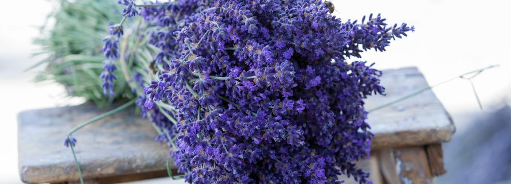 Přírodní léčiva: Na jaké bylinky vsadit a na co si dát hlavně pozor?