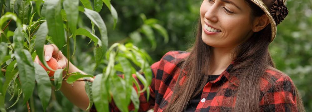Srpen jako měsíc úrody: jak probíhaly oslavy dožínek?