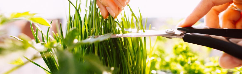 Jaro ve znamení čerstvých bylinek. Jaké oceníte v kuchyni na parapetu?