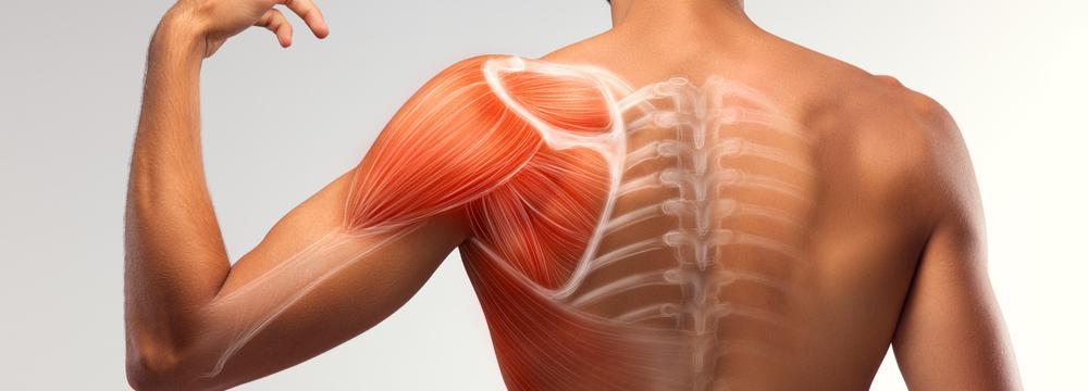 Jak efektivně budovat funkční svaly tak, aby vám opravdu sloužily?