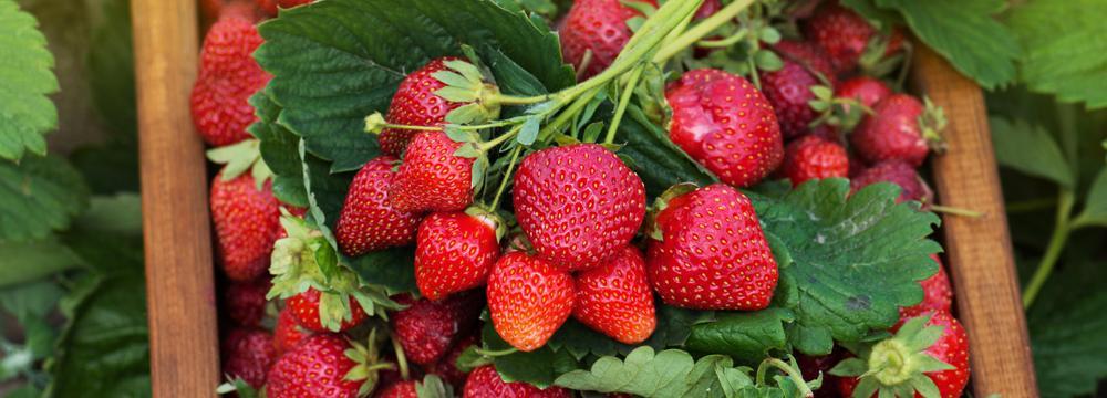 Potraviny, které jsou v červnu v té nejlepší kondici. Zařaďte je do jídelníčku!