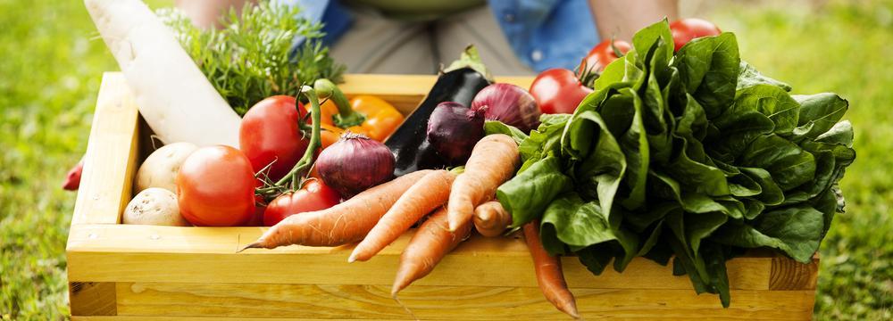 Ekologické zemědělství: V čem tkví jeho výhody a proč má smysl ho podporovat?