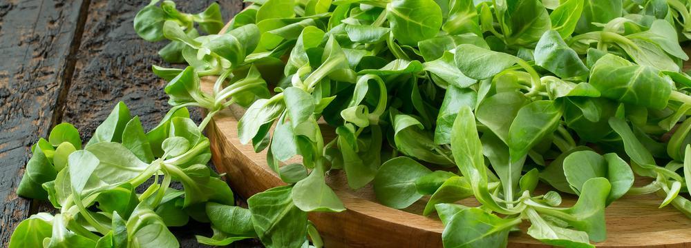Salát polníček: vliv na zdraví a využití v kuchyni