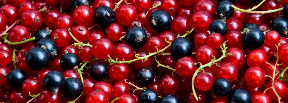 Rybíz: příznivé účinky na zdraví a tipy na využití v kuchyni