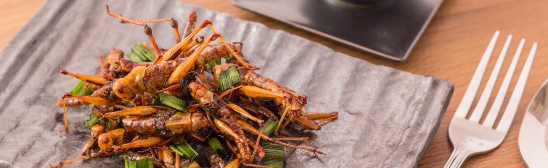 Hmyz je hitem zdravé výživy. Proč je stále více populární?