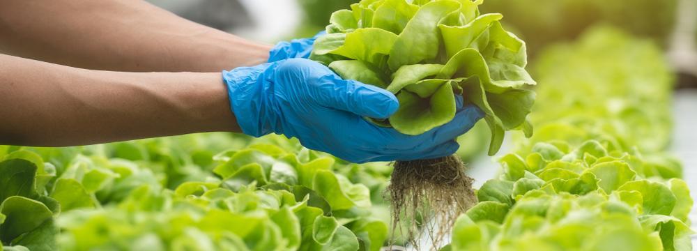 Klasika, která nestárne a nikdy neomrzí: Hlávkový salát na nekonečno způsobů