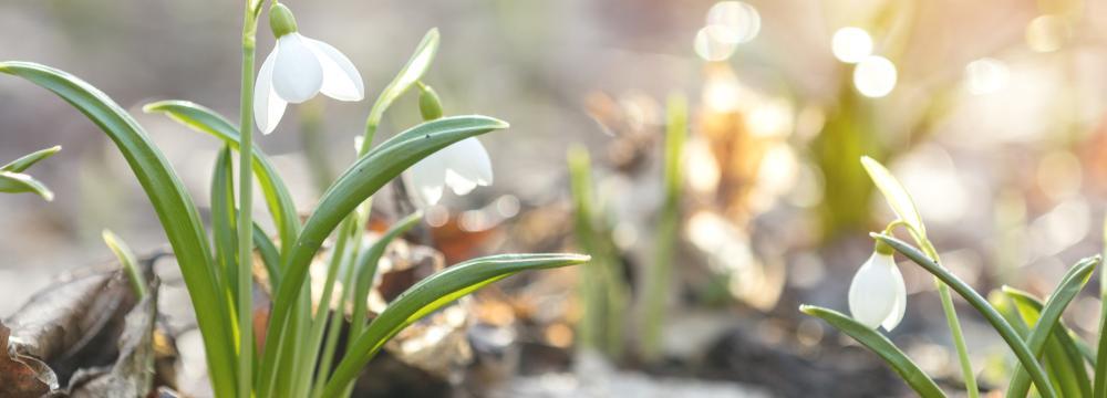 20. března je první jarní den. V čem se můžeme inspirovat od našich předků?