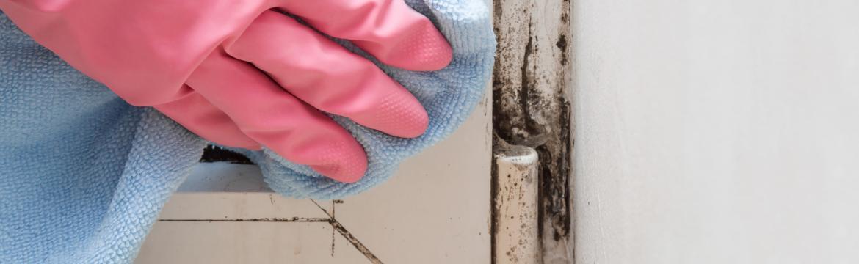 Vyzrajte na nebezpečné plísně ve vaší domácnosti