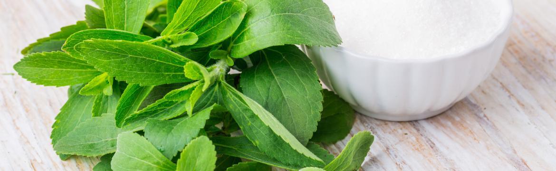 Stévie: Bezkalorická alternativa cukru, kterou můžete pěstovat i doma