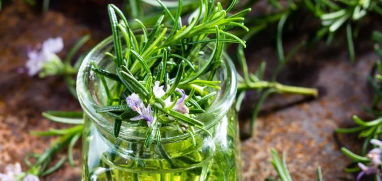 Bylinka rozmarýn má využití v kuchyni, přírodní lékárně i v kosmetice