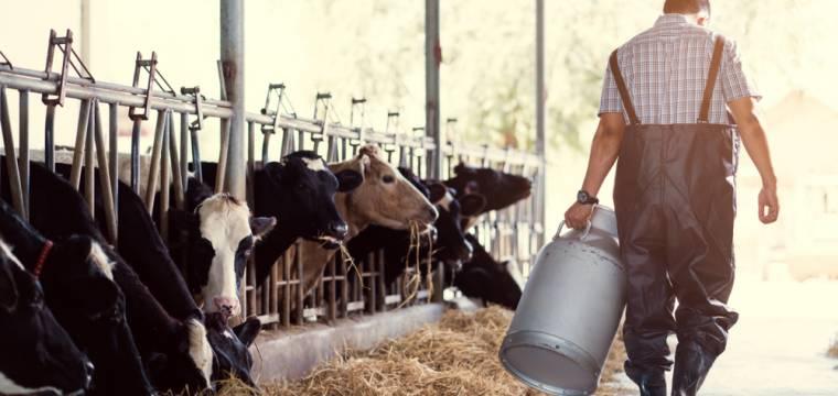 Klasické mléko vs. mléko z farmy:  Jaký je zdravotní přínos a můžeme věřit mléku z obchodu?