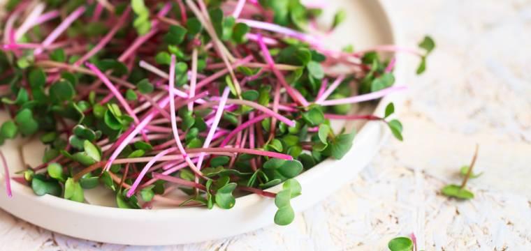 Klíčky a výhonky jsou hvězdou jara – zbavte luštěniny nadýmavého efektu a konečně si je užijte!