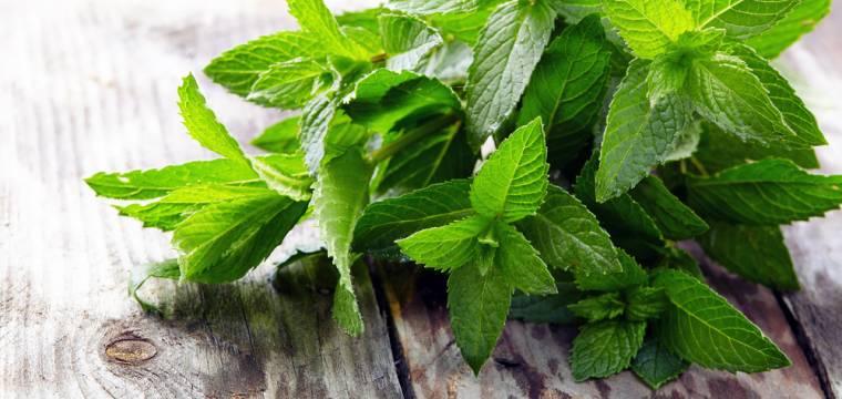Máta – bylinka, která uklidní žaludek, osvěží dech a pozvedne náladu