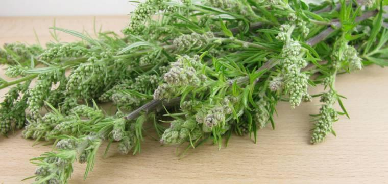 Pelyněk – rituál vykuřování  i součást domácí lékárny