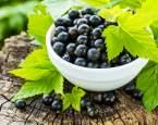 Černý rybíz je nabitý vitamínem C. Proč se ještě vyplatí mít ho v jídelníčku?
