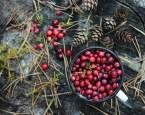 Brusinky: účinky na zdraví a jejich využití v jídelníčku