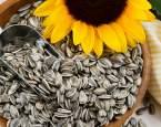 Chemie v kuchyni: Proč nám slunečnicová semínka občas při pečení zmodrají?