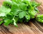 Koriandr – exotická bylinka s působivým nutričním profilem